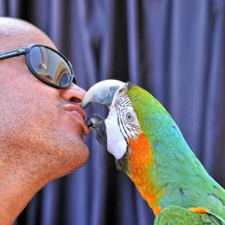 Psittacosis  is a disease that often affects parrots and canaries.