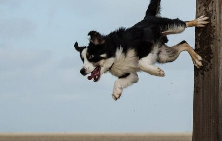 First Aid for Falls in Dogs