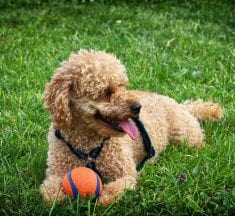 Things You Can Do to Keep Your Pet Healthy