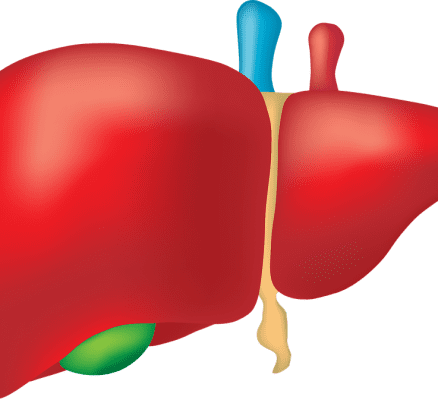Liver Problems – Symptoms And Causes