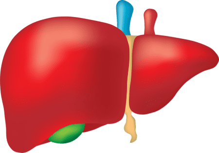 Liver Problems - Symptoms And Causes