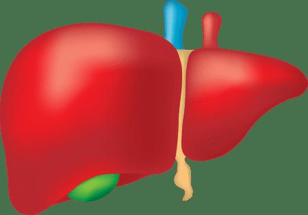 Liver Problems - Symptoms And Causes